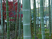 修善寺中的孟宗竹林:L1030718.b.jpg
