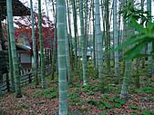 修善寺中的孟宗竹林:L1030719.b.jpg