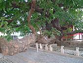 「庇祐庶民」的千年茄苳樹:L1040822.b.jpg