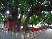 「庇祐庶民」的千年茄苳樹:L1040824.b.jpg