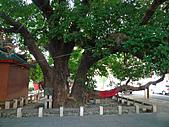 「庇祐庶民」的千年茄苳樹:L1040825.b.jpg