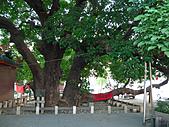 「庇祐庶民」的千年茄苳樹:L1040827.b.jpg