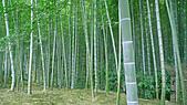 2009日本京都之旅:嵯峨野竹林