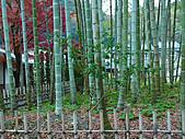 修善寺中的孟宗竹林:L1030712.b.jpg