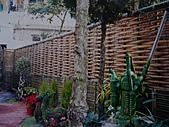 竹籬笆的春天:竹籬