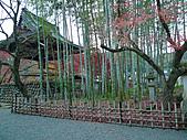 修善寺中的孟宗竹林:L1030713.b.jpg