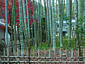 修善寺中的孟宗竹林:L1030715.b.jpg