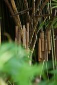 「樂在原木生活」一書的照片:IMG_3874.jpg