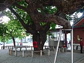 「庇祐庶民」的千年茄苳樹:L1040828.b.jpg