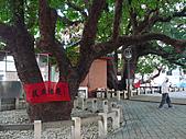 「庇祐庶民」的千年茄苳樹:L1040829.b.jpg