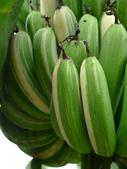 變種香蕉:L1070116.b.jpg