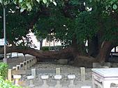「庇祐庶民」的千年茄苳樹:L1040819.b.jpg