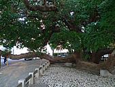 「庇祐庶民」的千年茄苳樹:L1040821.b.jpg