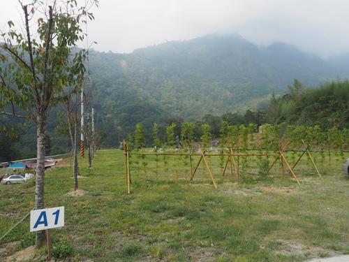 P1010028.JPG - 第84露新竹八五森林