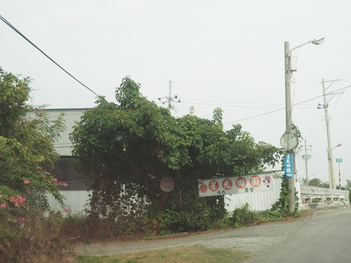 P1010087.JPG - 第93露台南星光