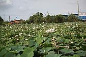 2009觀音賞蓮紀實:IMG_1992.JPG