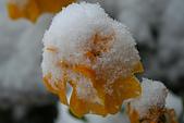 遇見2008飛驒高山初雪:IMG_4859.JPG