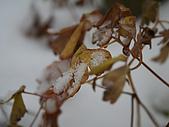 遇見2008飛驒高山初雪:IMG_4854.JPG