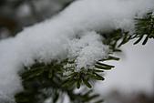遇見2008飛驒高山初雪:IMG_4853.JPG