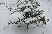 遇見2008飛驒高山初雪:IMG_4850.JPG