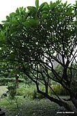 植物園:IMG_9770.JPG