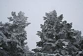 遇見2008飛驒高山初雪:IMG_4839.JPG
