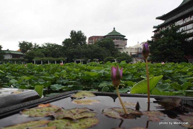 植物園:IMG_9780.JPG