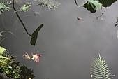 植物園:IMG_9782.JPG