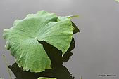 植物園:IMG_9785.JPG