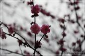 武陵農場:DSC_8336.jpg