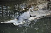 不一樣鱷魚生態農場:DSC_8721.JPG