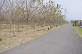 林後四林平地森林園區:DSC_8694.JPG