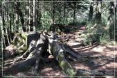 大雪山森林遊樂園區:DSC_8832.jpg