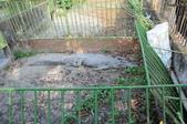 不一樣鱷魚生態農場:DSC_8728.JPG