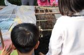 不一樣鱷魚生態農場:DSC_8733.JPG