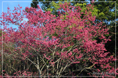 棲蘭國家森林遊樂區:DSC_8170.jpg