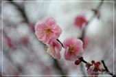 武陵農場:DSC_8338.jpg
