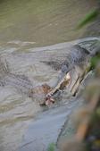不一樣鱷魚生態農場:DSC_8703.JPG