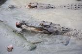 不一樣鱷魚生態農場:DSC_8709.JPG