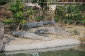 不一樣鱷魚生態農場:DSC_8737.JPG