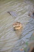 不一樣鱷魚生態農場:DSC_8701.JPG