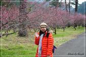 武陵農場:DSC_8335.jpg