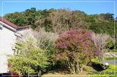 棲蘭國家森林遊樂區:DSC_8184.jpg