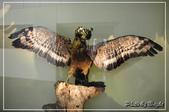 自然科學博物館:DSC_0488.jpg