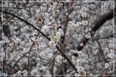 武陵農場:DSC_8331.jpg