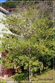 棲蘭國家森林遊樂區:DSC_8185.jpg