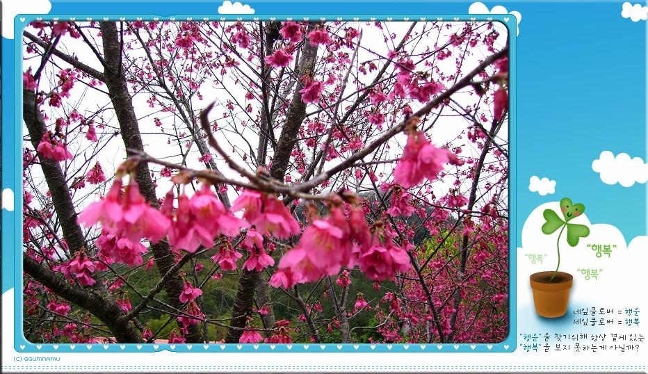 980126-28內灣.南庄遊:IMGP0357.jpg