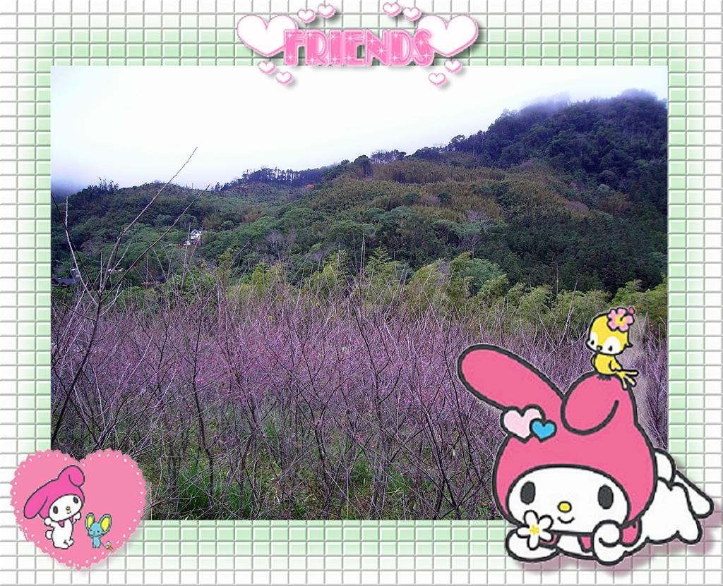 980126-28內灣.南庄遊:IMGP0354.jpg