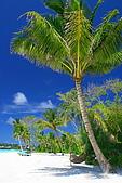 Maldives:門口的大樹