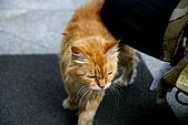 Macau 澳門:東方基金會一隻很黏人的貓